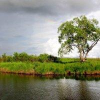 после дождя :: Marusiya БОНДАРЕНКО
