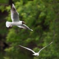 Чайки :: Alex Bush