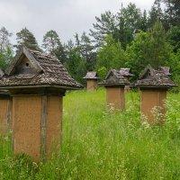 В Вигерском Национальном Парке :: Kliwo