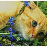 любитель цветов :: Viktoriya Bilan