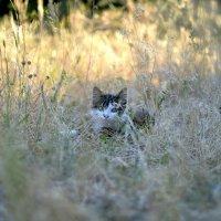 Котёнок :: Иван Сагиров