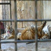 "Зоопарк ""Сказка"", Ялта :: Наиля"