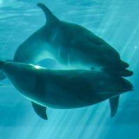 дельфины :: Андрей Герасимов