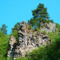 И на камнях растут деревья :: Владимир Звягин
