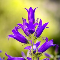 Лето, цветы... :: Татьяна Н.