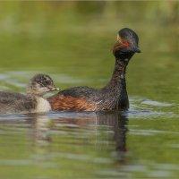 Мама и дитя :: Анна Солисия Голубева