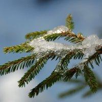Признаки весны :: Игорь Шипов