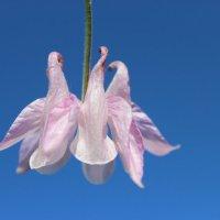 Цветы как птицы :: Mariya laimite