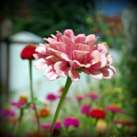 Городские цветы-3 :: Андрей Заломленков