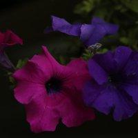 Цветочный хоровод-180. :: Руслан Грицунь