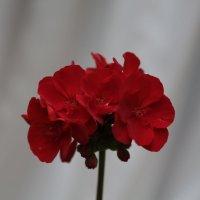 Цветочный хоровод-179. :: Руслан Грицунь