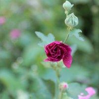 Цветочный хоровод-178. :: Руслан Грицунь