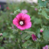 Цветочный хоровод-177. :: Руслан Грицунь