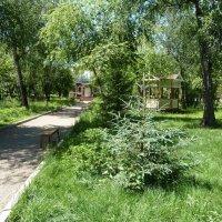 В парке Усадьбы Сукачёва. Ель. :: Галина