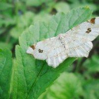 Бабочки :: Александр Лавров