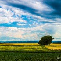 небо и поля :: Олег Цуциев