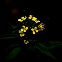 цветы.... :: Dashiki