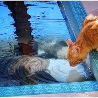 Бенгальские коты... :: Кай-8 (Ярослав) Забелин
