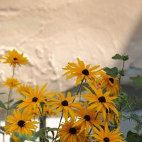 Цветочный хоровод-183. :: Руслан Грицунь