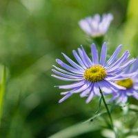 Какой-то цветочек :: Мария Иванова