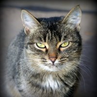 Думы о кошках... :: Андрей Заломленков