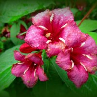 Летнее цветение :: Сергей Карачин