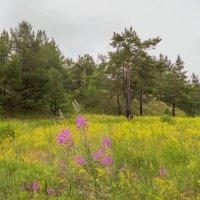 На поляне :: Юрий Стародубцев
