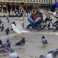 Коллега с птицами :: M Marikfoto