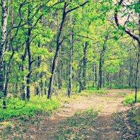 Весенний лес :: Marina Letchenya