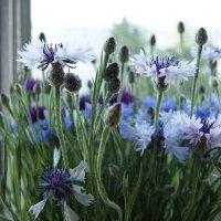 Полевые цветы :: nika555nika Ирина