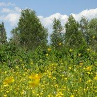 Желтая лужайка. :: Валерий Изотов