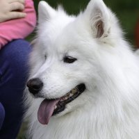 Пёс. :: Игорь Денисов