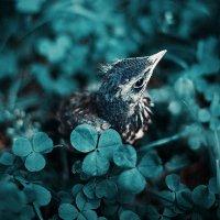 Синяя птица :: Ежъ Осипов