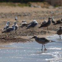 Море,солнце,чайки :: Таня Фиалка