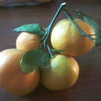 Веточка лимона :: Алла Балашова
