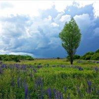 Кажется, дождь собирается... :: Валерия Комова