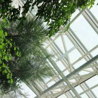 Garden :: Darya Karnaeva