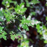 Лесная растительность :: Владимир Немцев
