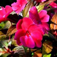 Цветы :: Милешкин Владимир Алексеевич