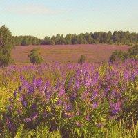 цветы лиловых полей :: Александра