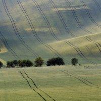 Панорама зеленного вилвета. :: Vladimir Nedayvoda