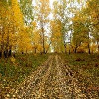 Дорога в Осень.... :: Прима Игорь Кондратьевич