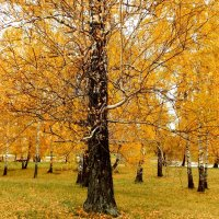 Золотая осень. :: Прима Игорь Кондратьевич