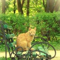kitty :: Ирина К