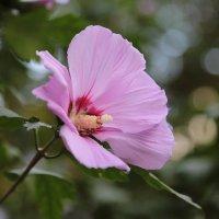 Цветочный хоровод-200. :: Руслан Грицунь