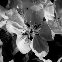Цветок :: Николай Филоненко
