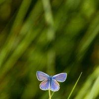 Бабочка :: Евгений Поляков