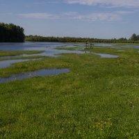 Разлив реки Тара :: Алексей Стряпонов