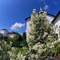монастырские цветы :: Владимир Вдовин