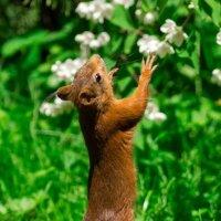 Какие чудесные цветочки :: Alex Bush